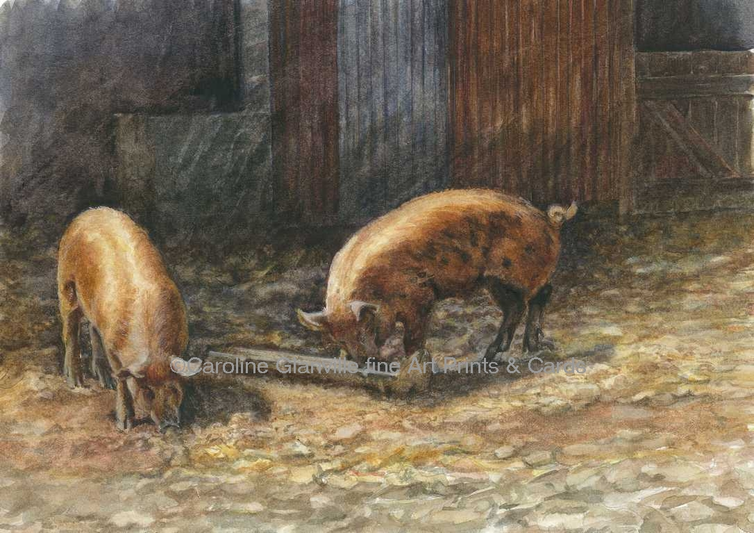 Tamworth pigs, painting by Caroline Glanville
